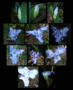 iris journey